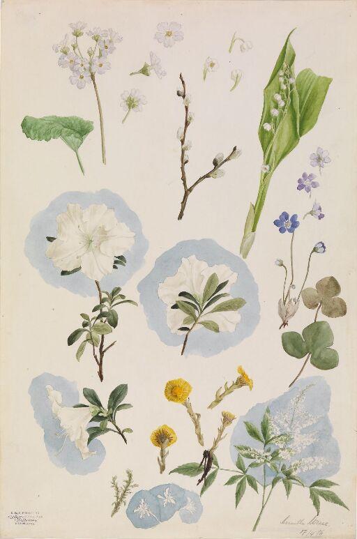 Blomsterstudie