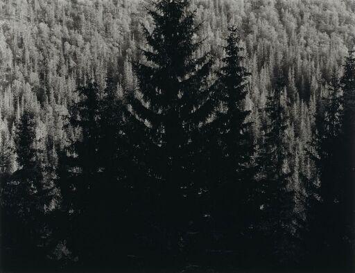 Granskog, Tinn 1984