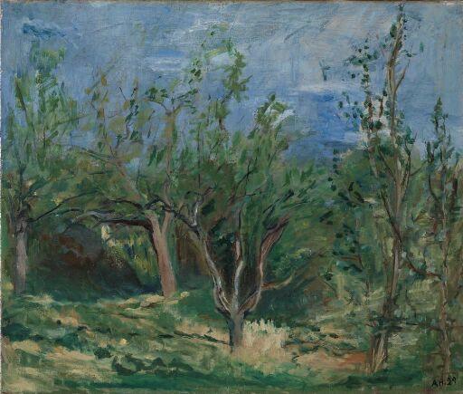 Gamle epletrær
