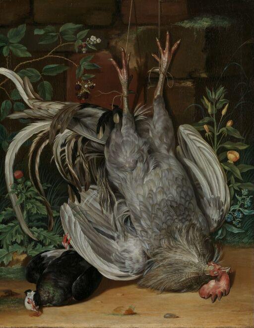 Døde fugler