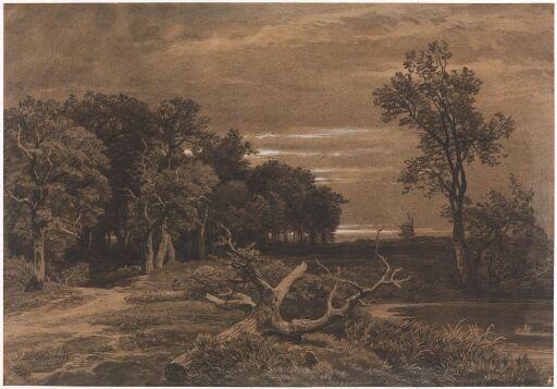 Skogparti med vindmølle