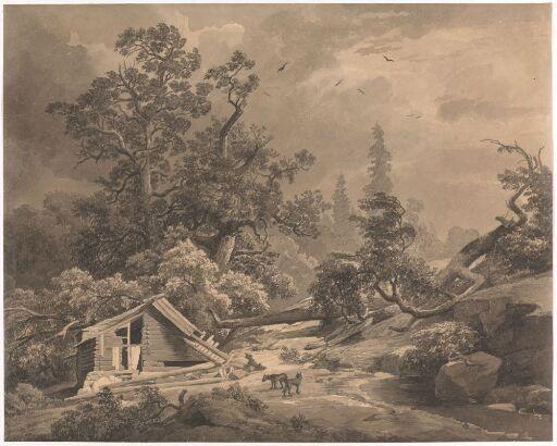 Eikeskog med vindfall