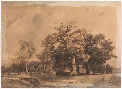 Eikeskog med to fugler i vannkanten