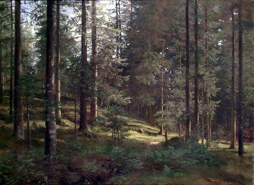 Skogsinteriør