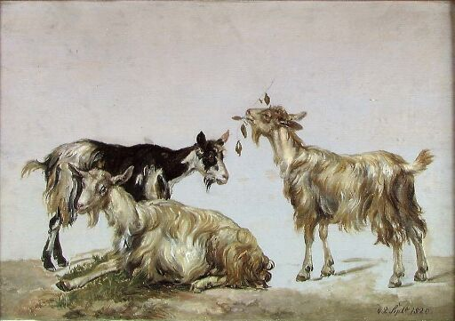 Study of three Goats