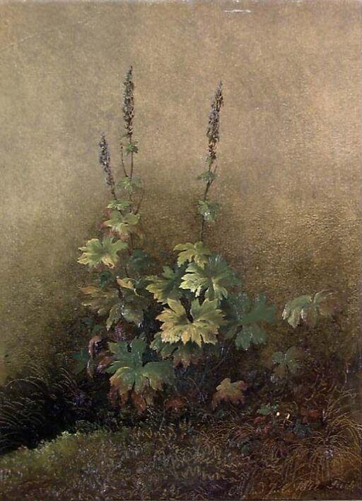 Plantestudie
