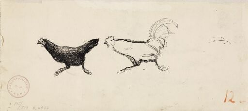 Hane jager høne