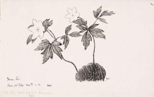 """Illustrasjon til Jonas Lie """"Familien på Gilje"""", København 1903 [-1904]"""