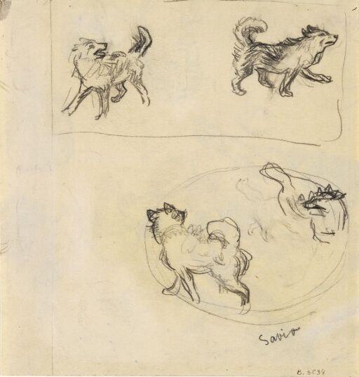 Studier av hund
