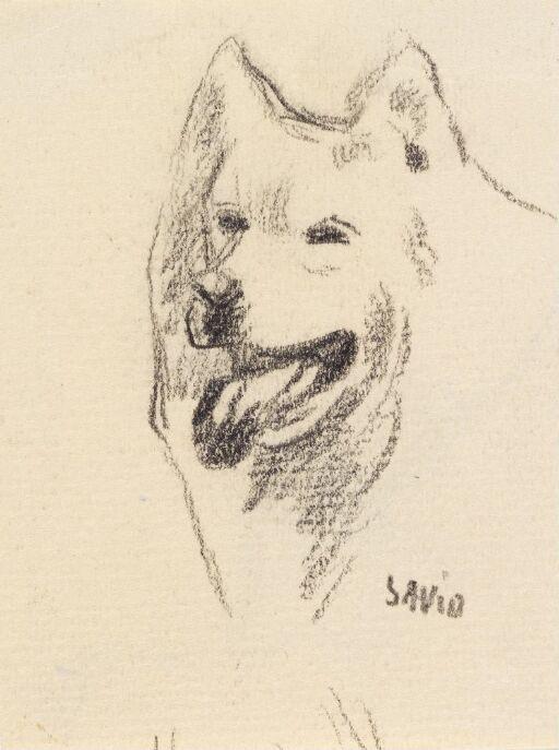 Studie av hundehode