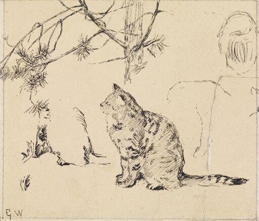 Studie av katt og furugrener