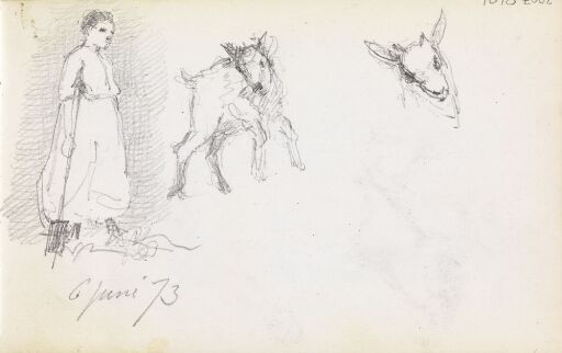 Studie av jente og geiter