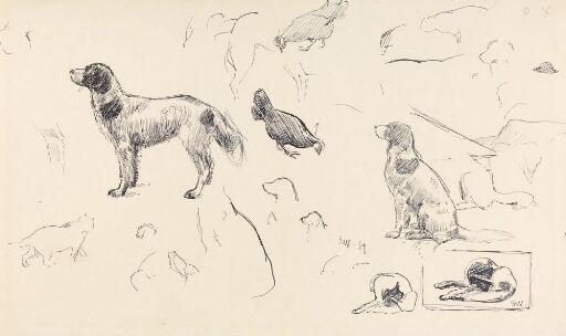 Studier av hunder, høne og katt