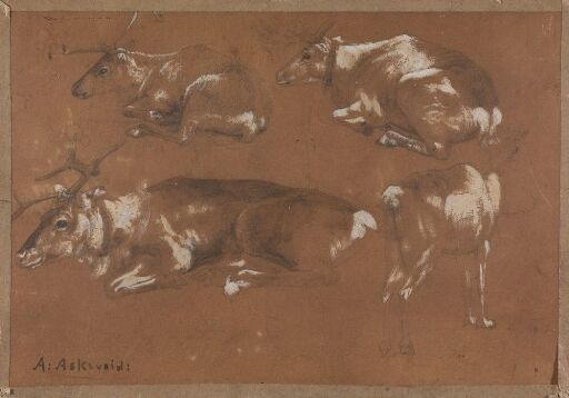 Study of four Reindeers