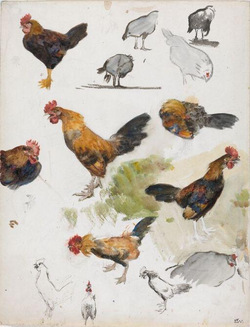 """Haner og høner. Studie til maleriet """"Haneslagsmålet"""""""