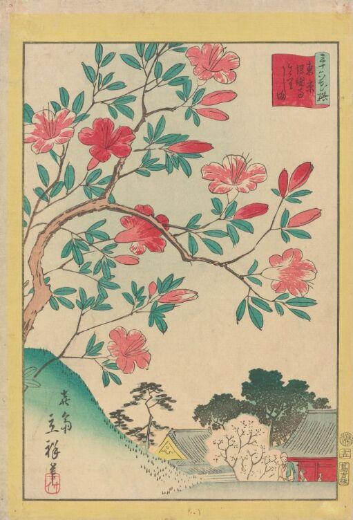 Rød Kirishima azalea ved Gokoku-tempelet i Tokyo