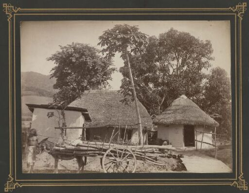 Kuliboliger, Trinidad