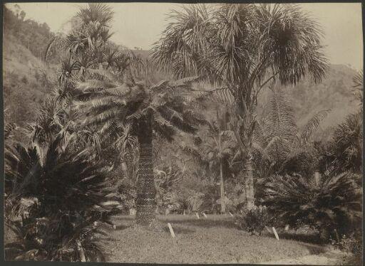 Castleton Garden Jamaica