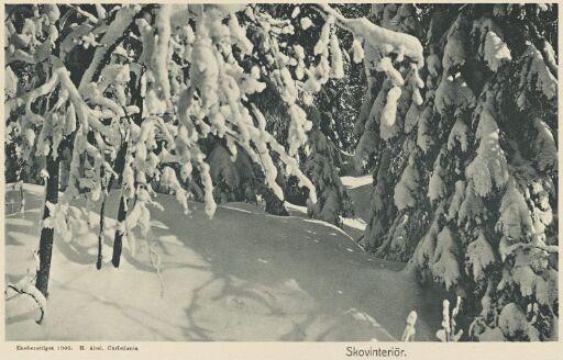 Skovinteriør