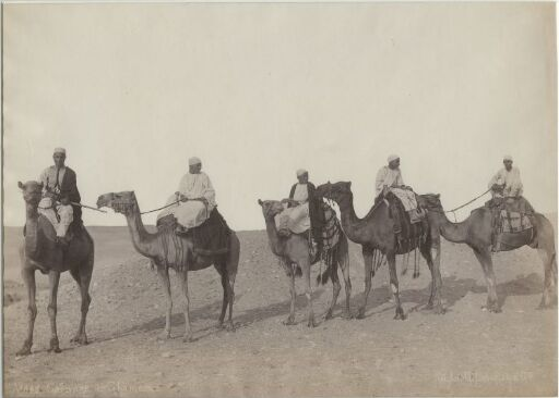 Caravane de Chameaux