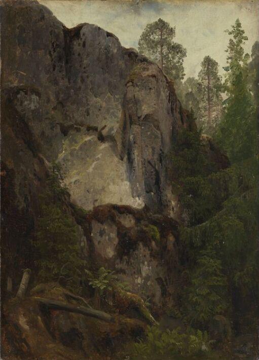 Skogstudie med mosegrodd fjellskrent