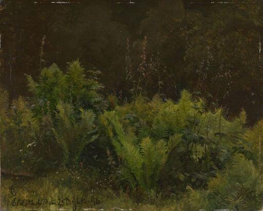 Study of Ferns