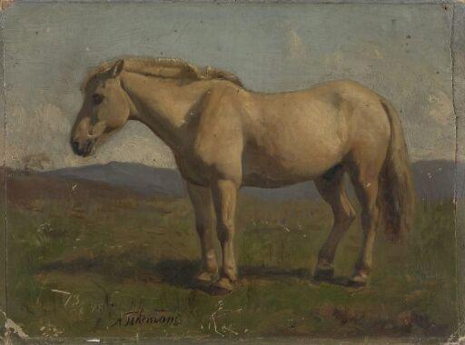 En blakk hest