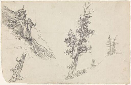 Studier av trær og røtter