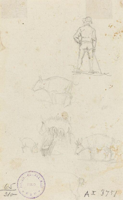 Figur- og dyrestudier