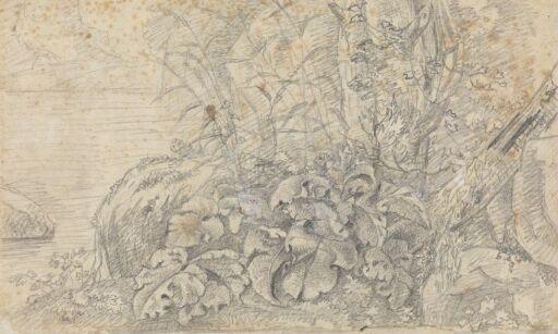 Plantestudie, etter Jan Both