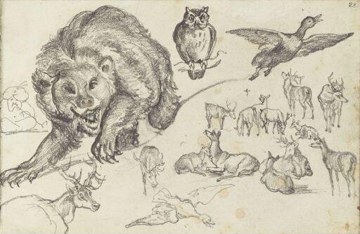 Bjørn, ugle, ender og reinsdyr