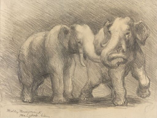 To elefanter, Bangkok