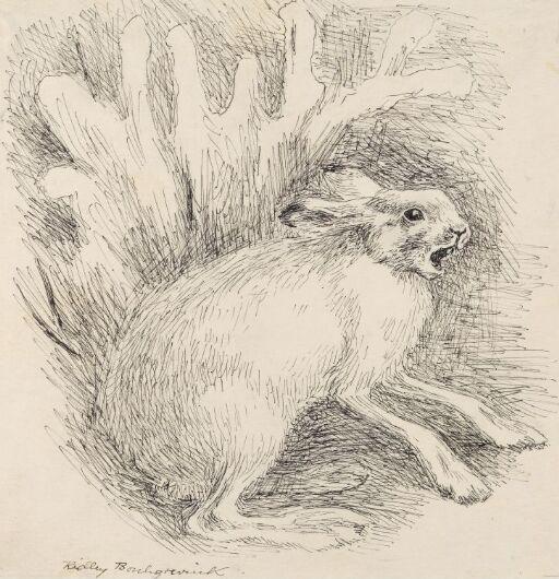 Haren skrek huttetutuhu over februarkulden