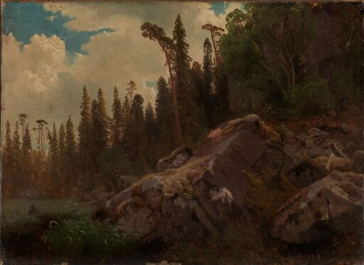Landscape Study with Trees and Rocks