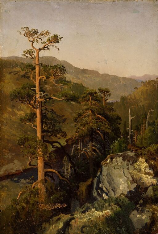 Rocky Landscape with Pinetreees