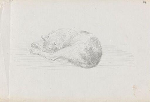 Sovende katt
