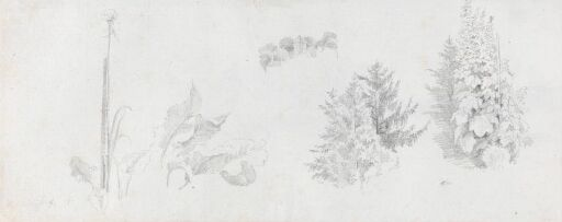 Studies of Plants and Trees and Tower on Mönchsberg