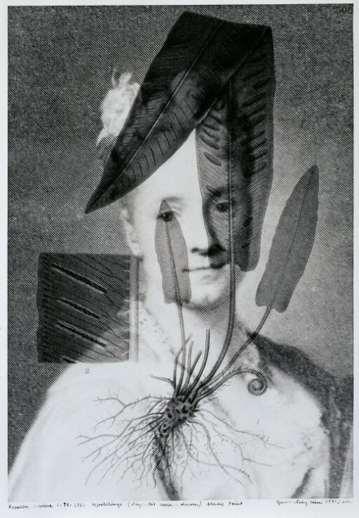 Rosalba Carriera (1675–1757) Hjortetunge, Phyllitis scolopendrium, sterkt truet
