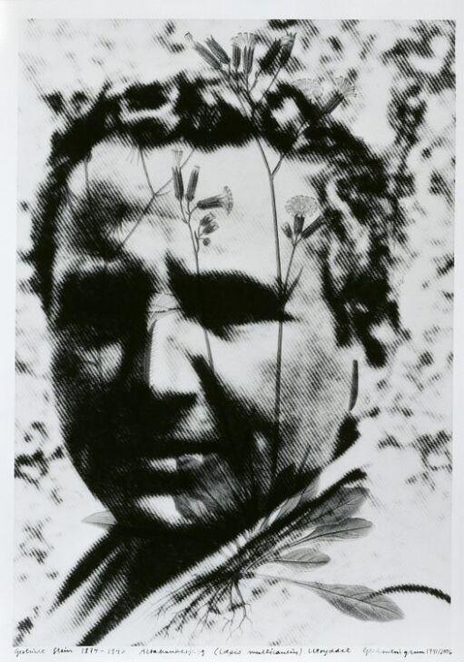 Gertrude Stein (1874–1946) Crepis Multicaulis, Extinct