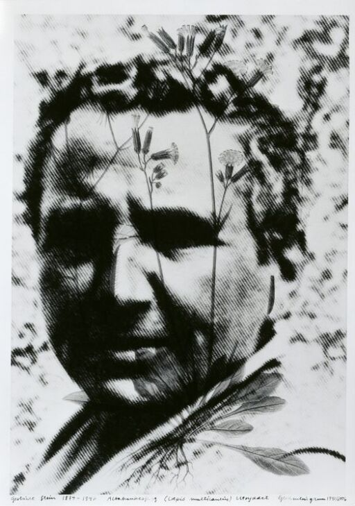 Gertrude Stein (1874–1946) Altaihaukeskjegg, Crepis multicaulis, utryddet