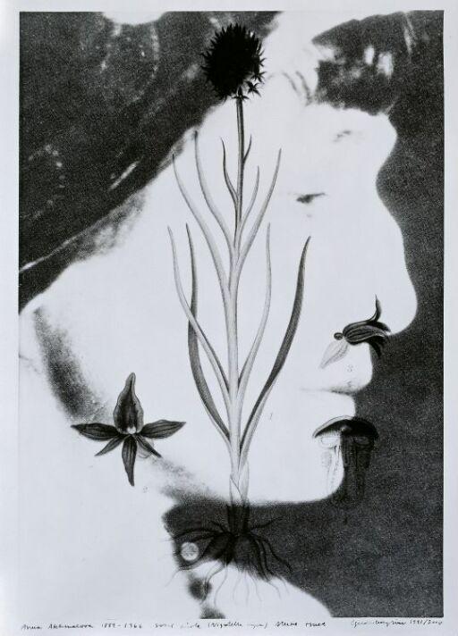 Anna Akhmatova (1889–1966) Nigritella Nigra, Highly Endangered