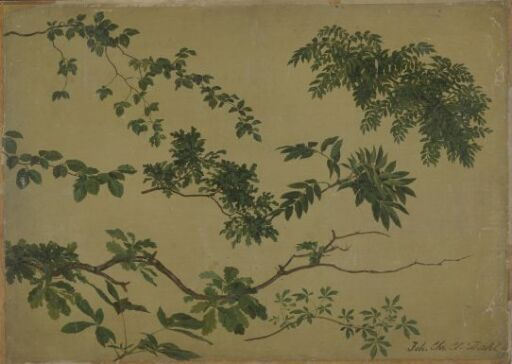 Study of Twigs and Leaves